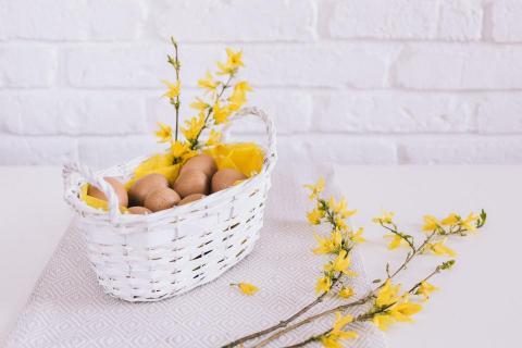 Œufs mimosas à la truite fumée de la Touvre (16)